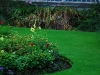 IrelandPlants2008-3.jpg